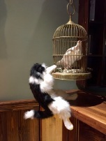 The Walled Off Hotel - cat with peacedove